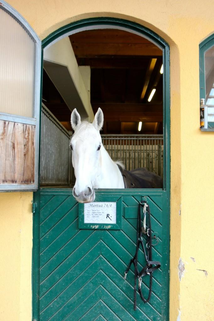 zu dem Hotel gehören auch Pferde und ein Reitstall
